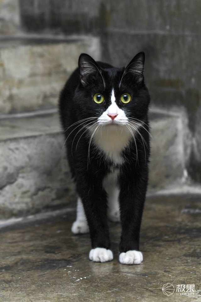 享受陪伴时光 | CatGenie猫洁易全自动猫厕所,猫咪的最爱!