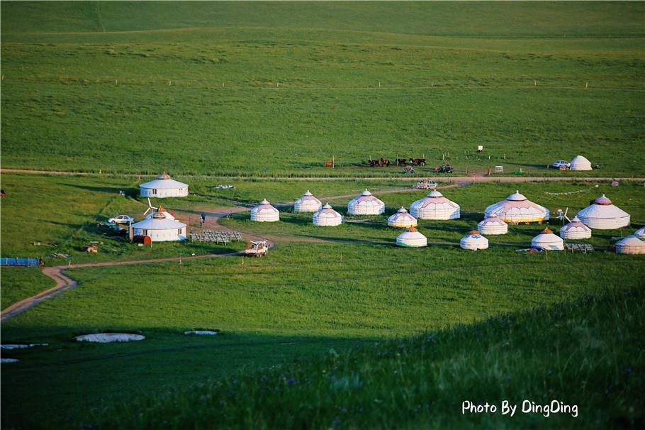 草原上这么大的蒙古包,纯手工不用一个螺丝,半小时就可