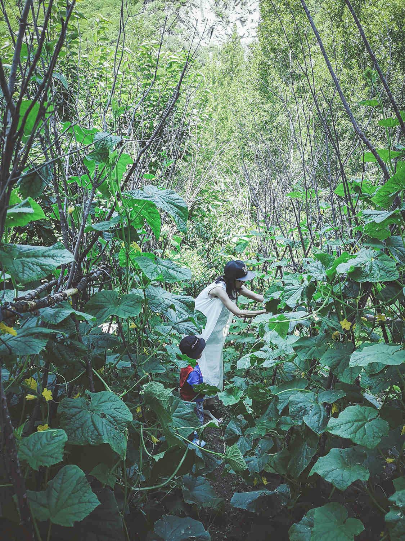 原始人玩坚果_这片被封禁300年的原始森林深处,藏着北京首家高山泡泡屋_山谷