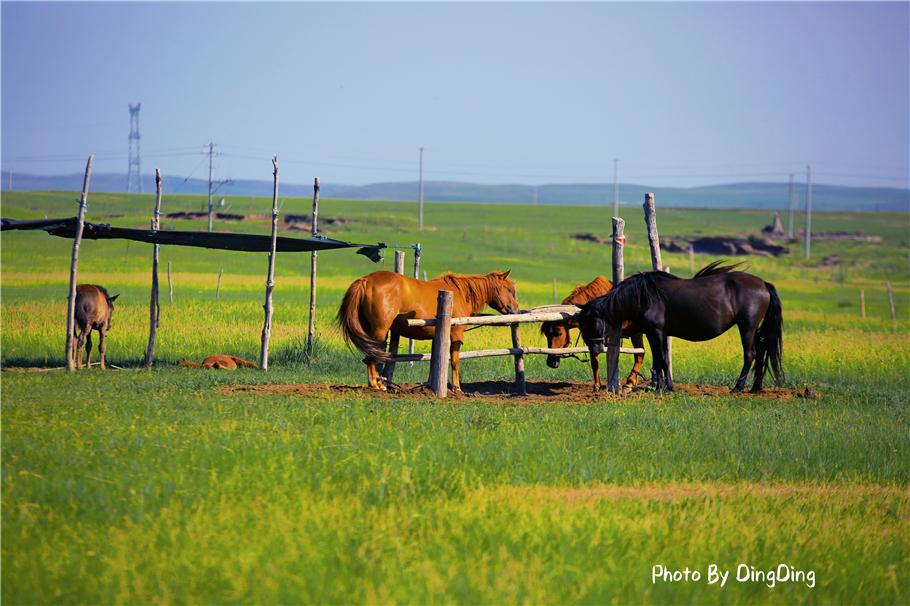 日本人经常来大草原深处,找牧民家奶桶里菌,那是草原人