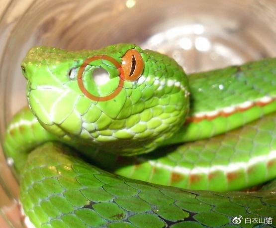 蛇在什么会咬人?如何预防?