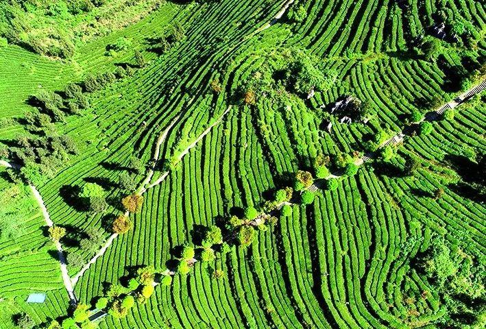 2019年中国茶叶区域公用品牌价值评估结果普洱茶6649亿