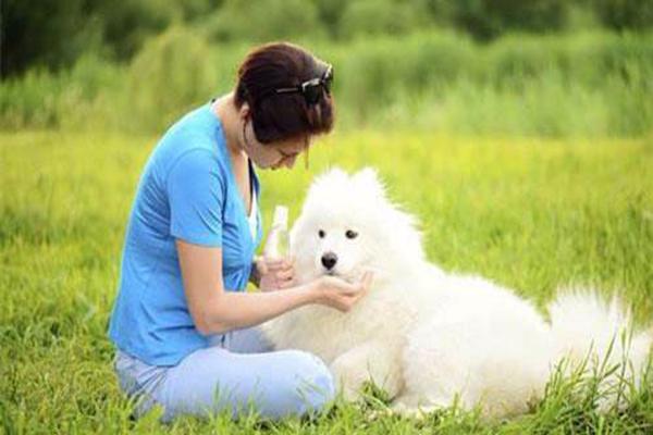 流产后注意事项_怀孕了可以养狗吗 家有孕妇养狗有啥注意事项_狗狗
