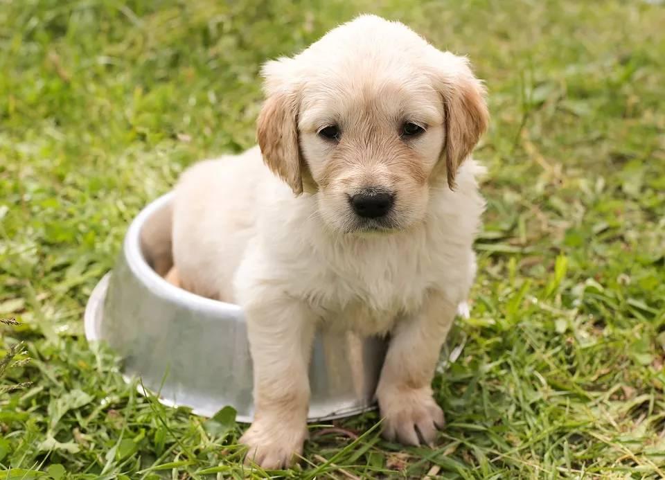 狗为什么爱吃屎?吃屎的原因有哪些?