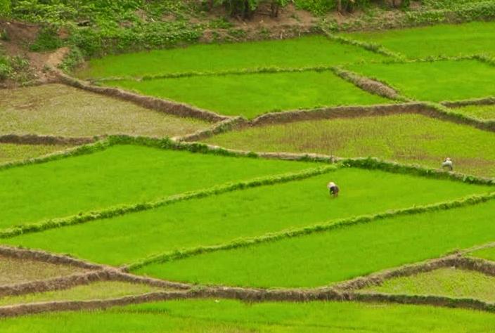 原创            外国网民提问:在中国菜中,米饭有什么意义?它几乎没有味道