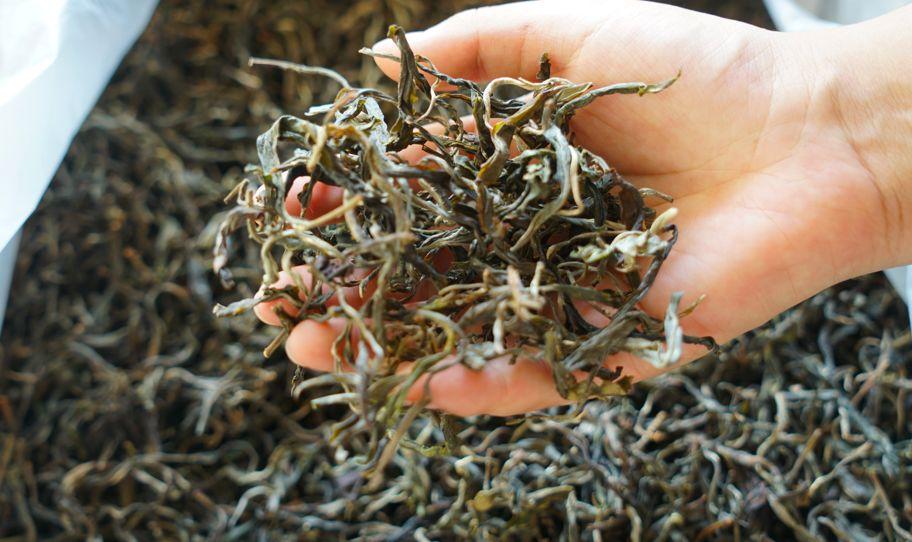 给你一套买普洱茶省钱的干货!!