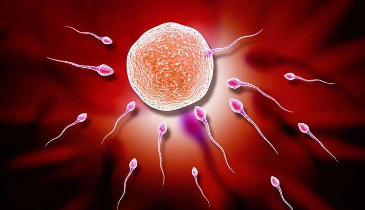 女人备孕时多吃三种食物,促进卵泡发育,怀孕也能事半功倍!