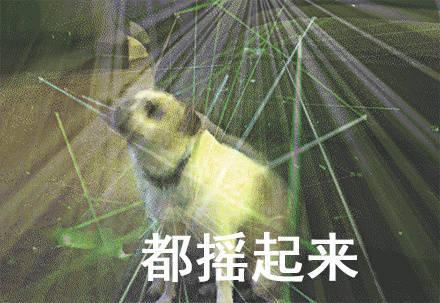 宠物-免费yoqq汪星人斗图表情包 了解一下yoqq资源(1)