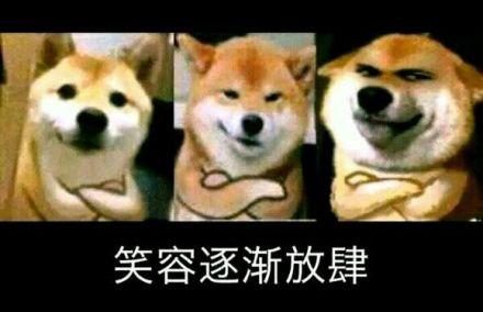 宠物-免费yoqq汪星人斗图表情包 了解一下yoqq资源(5)