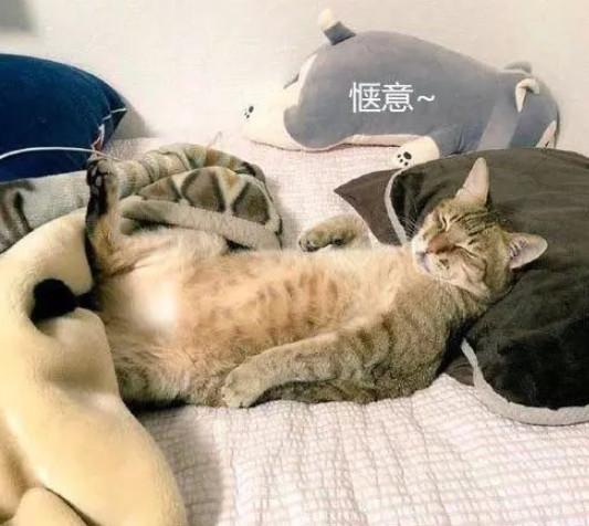 宠物-免费yoqq主人下班回家,看到猫咪的样子哭笑不得:猫大爷你睡得舒服不yoqq资源(2)