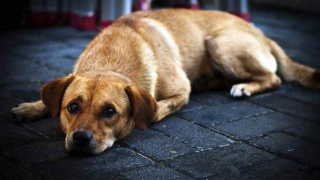 如果白送你一只狗狗,这5种狗你会抱哪只回家,我选金毛犬