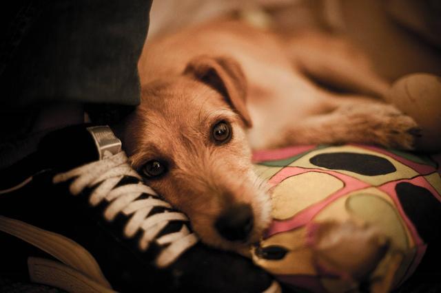 我们应如何面对宠物的离去?四点方法令铲屎官快速走出悲伤
