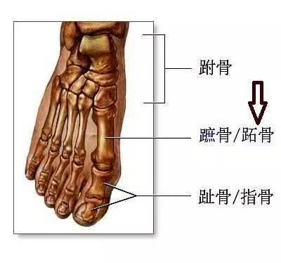 女人体穴位高清图_脚部骨骼图大全_脚部骨骼图汇总