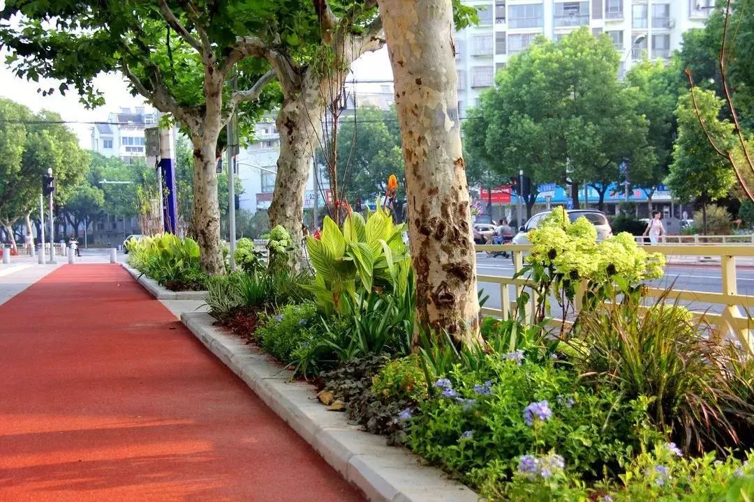 奇葩 钱桥社区的城市绿化连续被盗,窃贼竟是一家4口