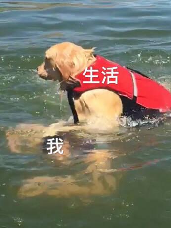 宠物-免费yoqq汪星人斗图表情包 了解一下yoqq资源(2)