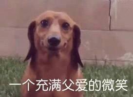 宠物-免费yoqq汪星人斗图表情包 了解一下yoqq资源(6)