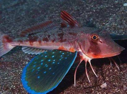 【海洋科普】鱼类的声音 (图7)