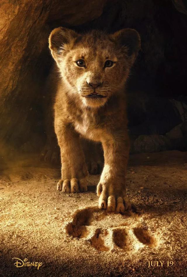 ,狮子,动物,狩猎场,客户,电影,猎物,圈养,照片,人类,Serabie,消息资讯,狮子,南非,狩猎场,动物,非洲,摄影,艺术,人物,绘画,,1p1p.work