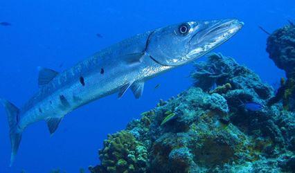 【海洋科普】鱼类的声音 (图8)