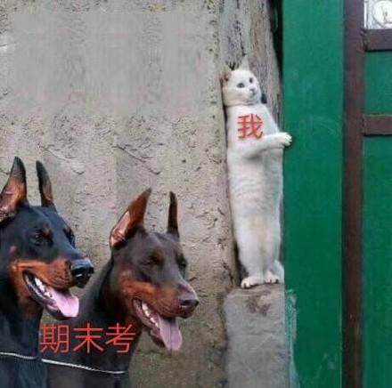 宠物-免费yoqq汪星人斗图表情包 了解一下yoqq资源(3)