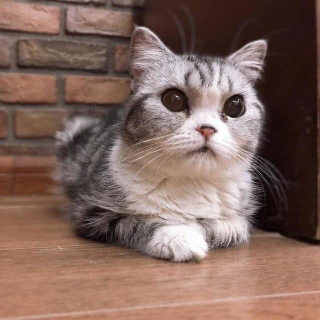 怎么给猫咪刷牙,猫咪会比较听话配合