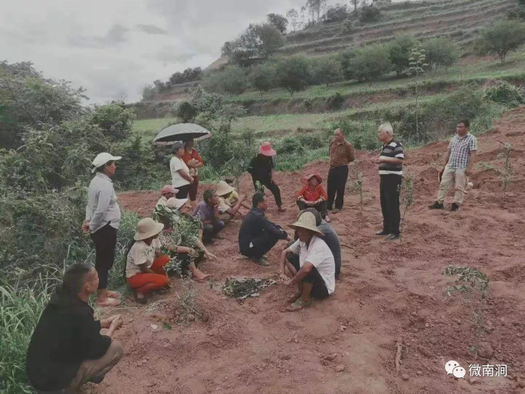 南涧移民后扶项目助推移民脱贫致富! 11