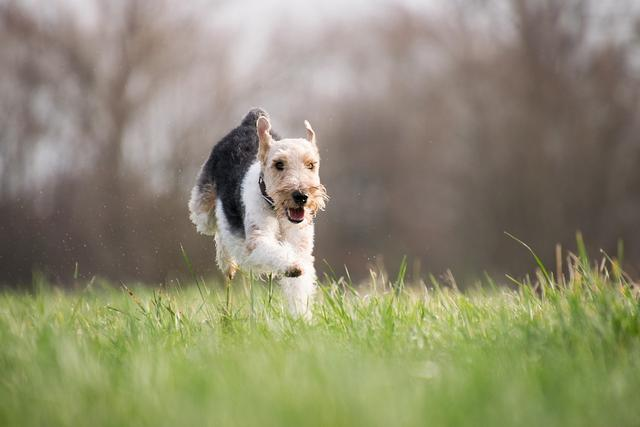 宠物肠胃不适,日常护理用益生菌还是盖夫益生元?