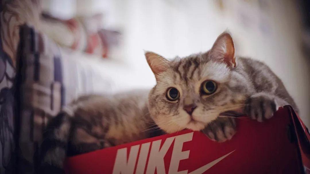 宠物医生咨询-浅谈一下宠物猫咪绝育的13个错误概念