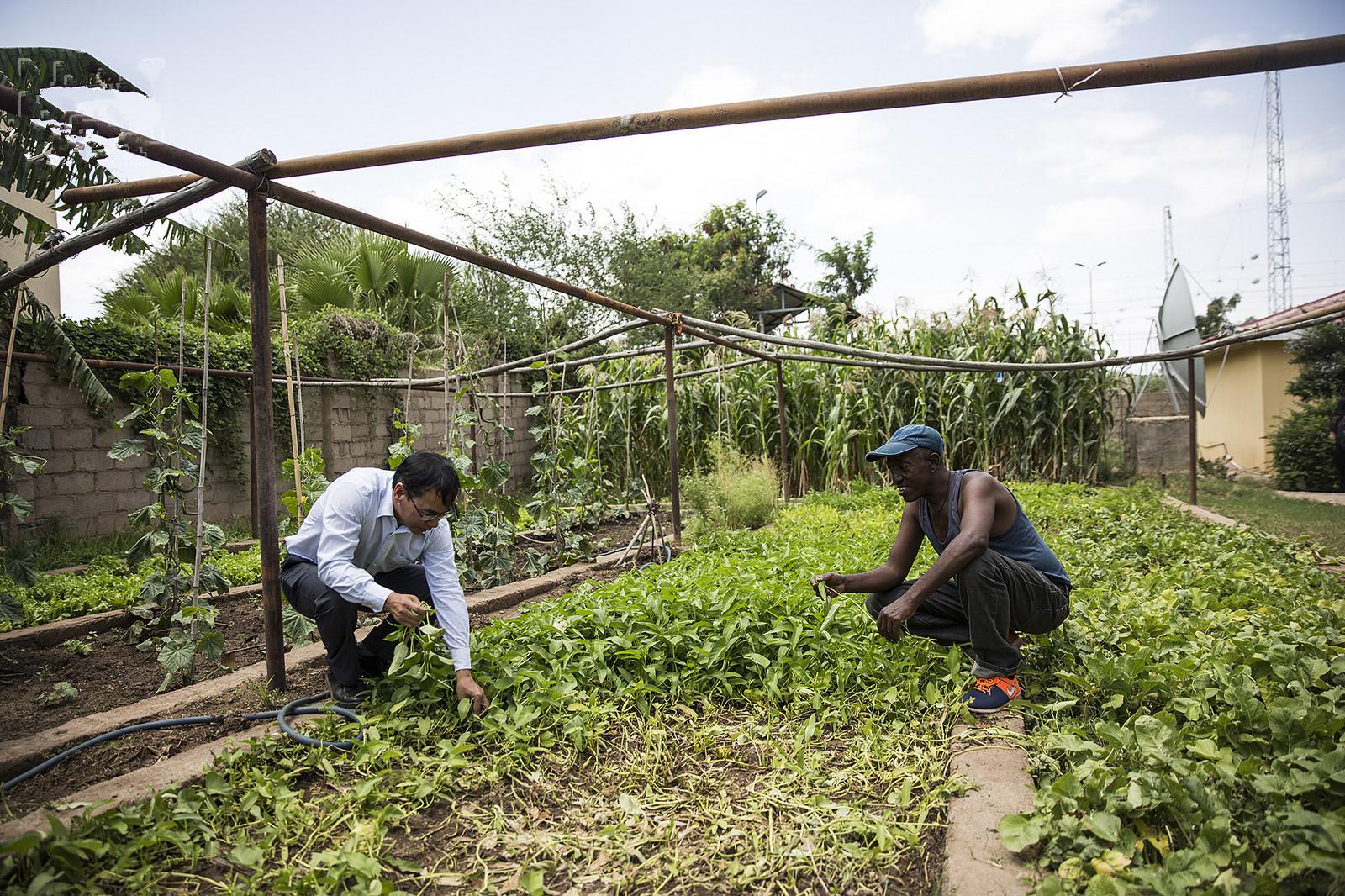 镜头下:大陆人在南非种的粮食大丰收,得到当地人的追捧