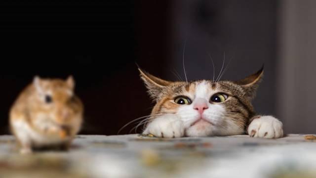 猫咪到了新家可能出现一些反常情况