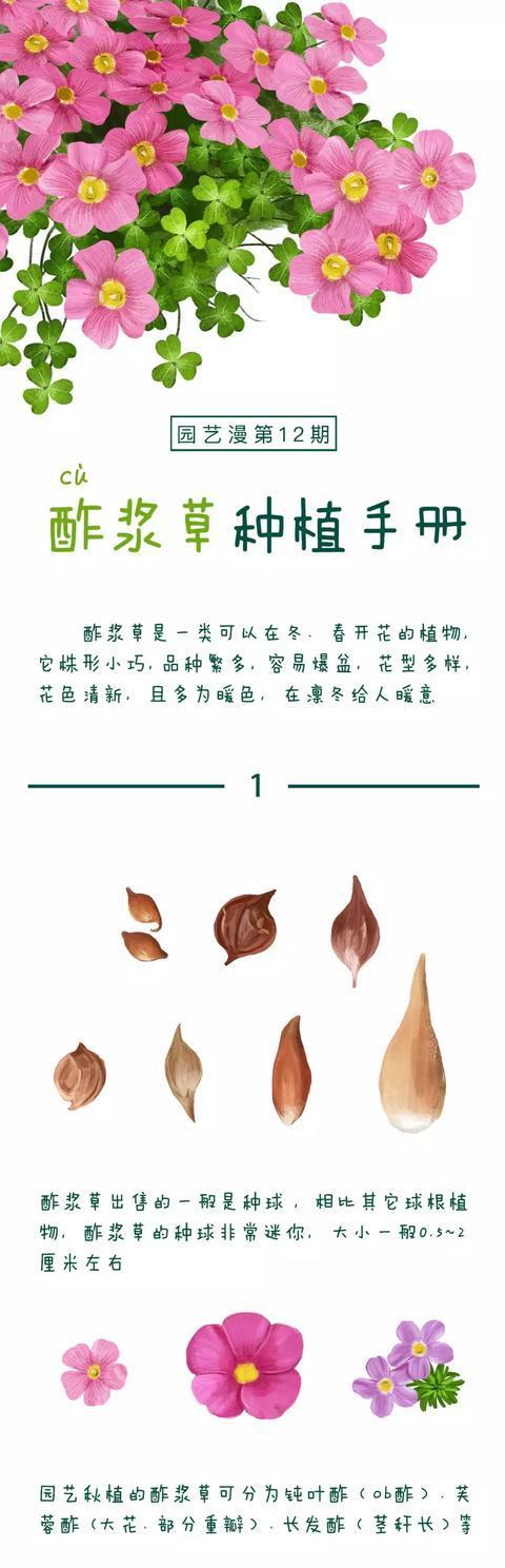 什么?不会养酢酱草?收下这份一看就懂的《酢浆草种植手册》!