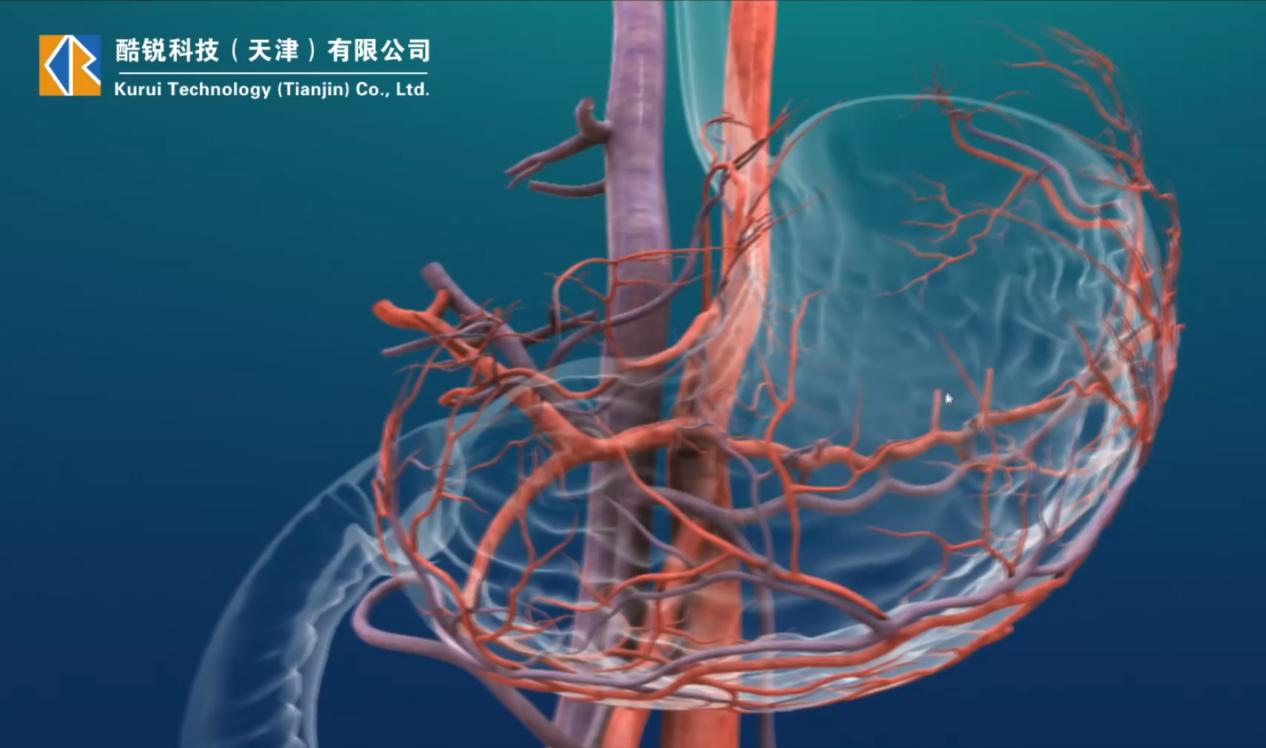 三维医学教学动画