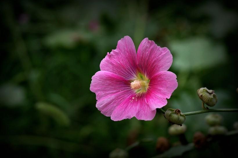 只要你初心不变,就能够陪你到老,在爱情中绝不轻易说分手的属相