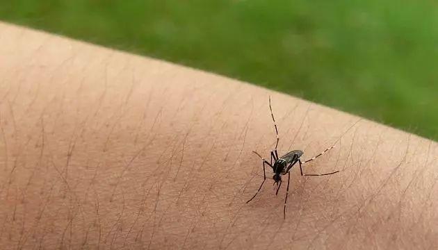 温州3人去了趟柬埔寨,遭蚊子叮咬感染登革热!出国旅游要注意