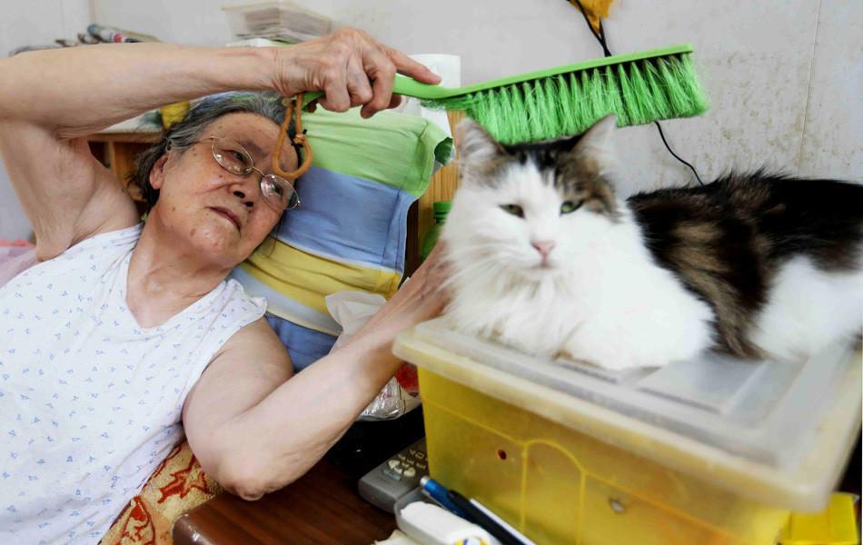 这个女人年近九旬,不愿将就一辈子未嫁,与两百只猫过完余生