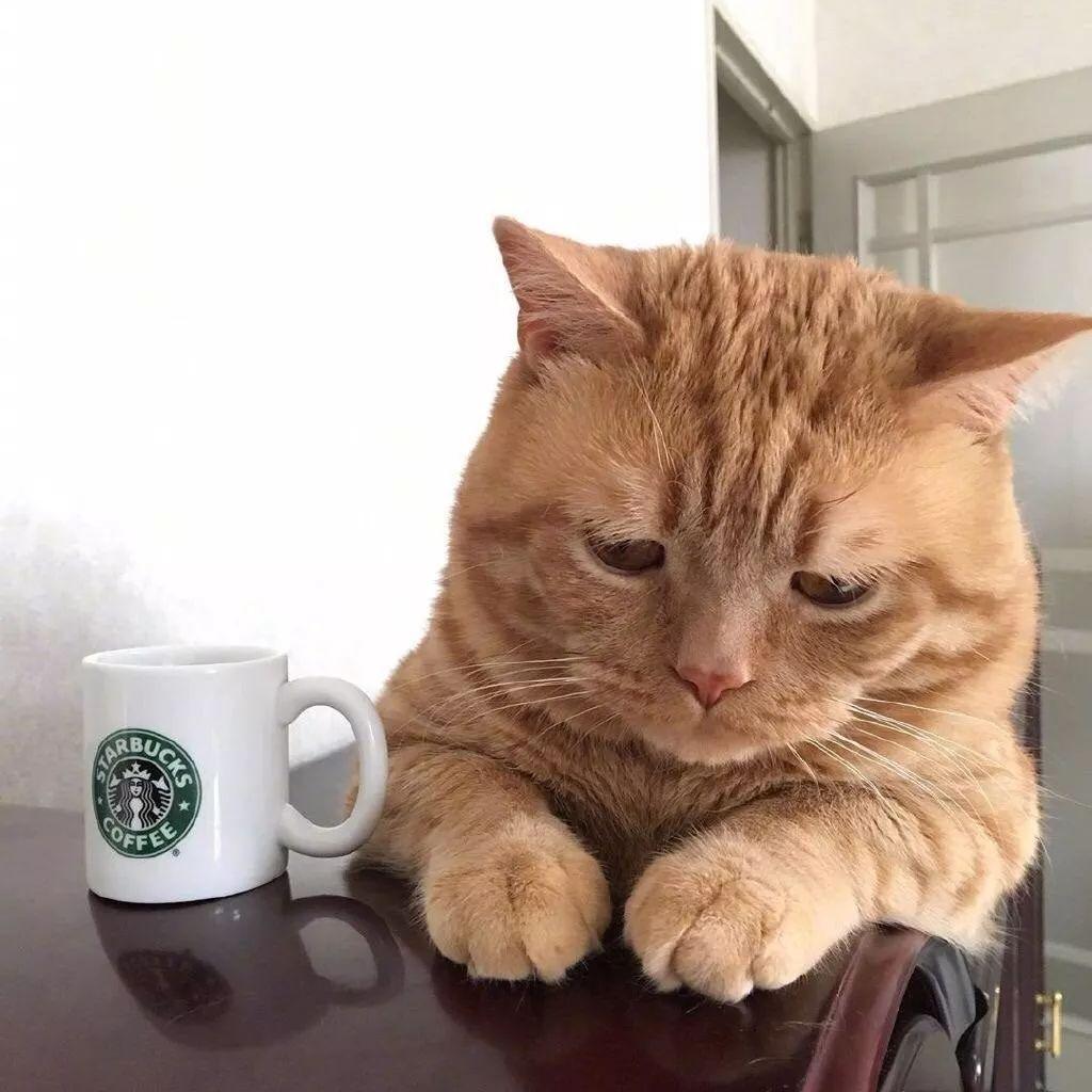 吃死猫的眼睛_能看却不能吃的痛苦,可愁死本猫了!_猫咪