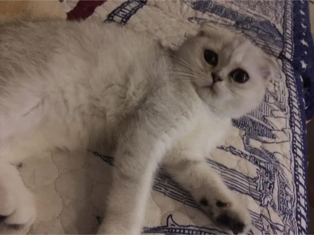 猫咪怎么这么爱睡觉?一天睡十几个小时