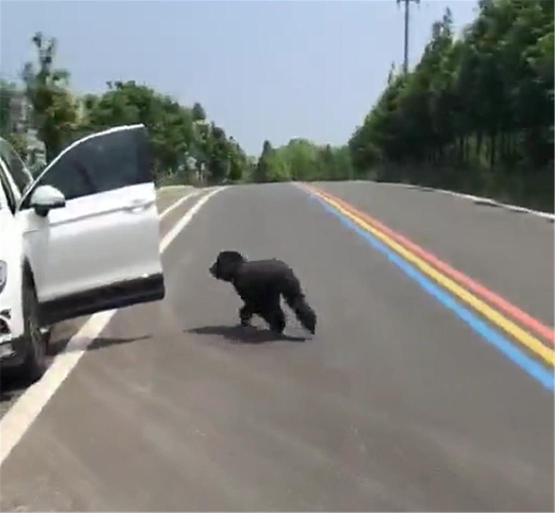 宠物-免费yoqq狗狗跟主人出行,走在马路上烫脚,主人一声令下狗狗撒丫子跑上车yoqq资源(7)