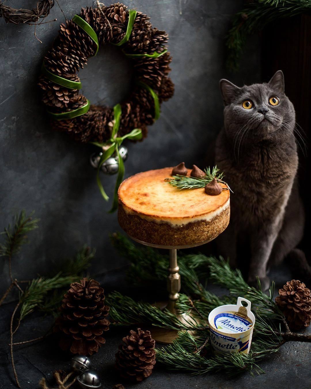 宠物-这位漂亮的美女蛋糕师,让猫咪来为蛋糕代言,将平淡无奇的蛋糕化腐朽为神奇(40)
