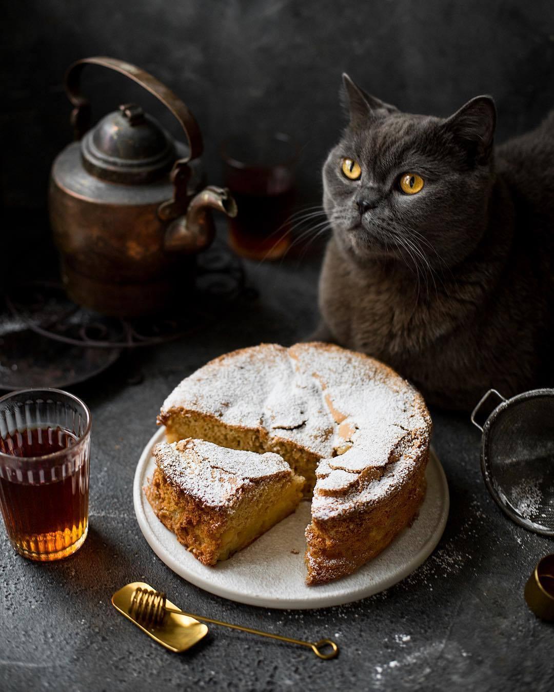 宠物-这位漂亮的美女蛋糕师,让猫咪来为蛋糕代言,将平淡无奇的蛋糕化腐朽为神奇(9)