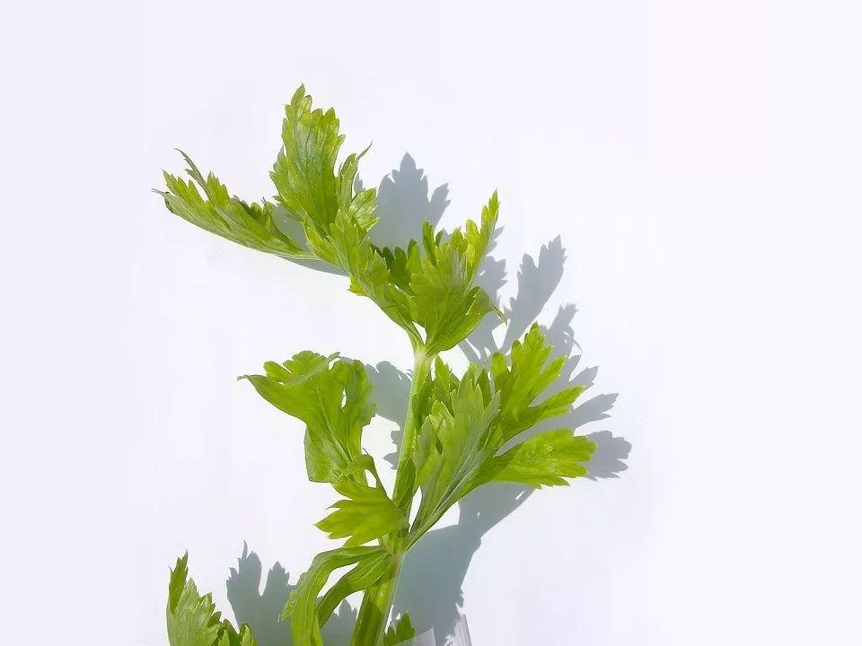 这种菜叶千万别扔,拌花生吃,补钙超棒!