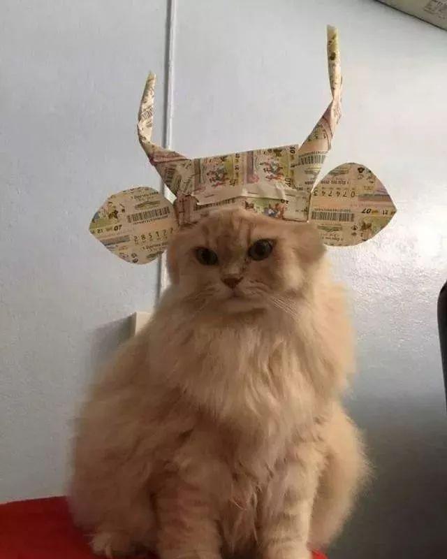 主人脑洞大开给猫咪做了一顶帽子,秒变包青天!