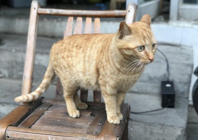 普贝斯:宠物猫为啥不会抓老鼠