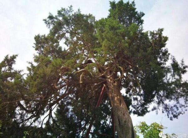 <b>武汉这些千年古树的树龄怎样测出来?专家说……</b>