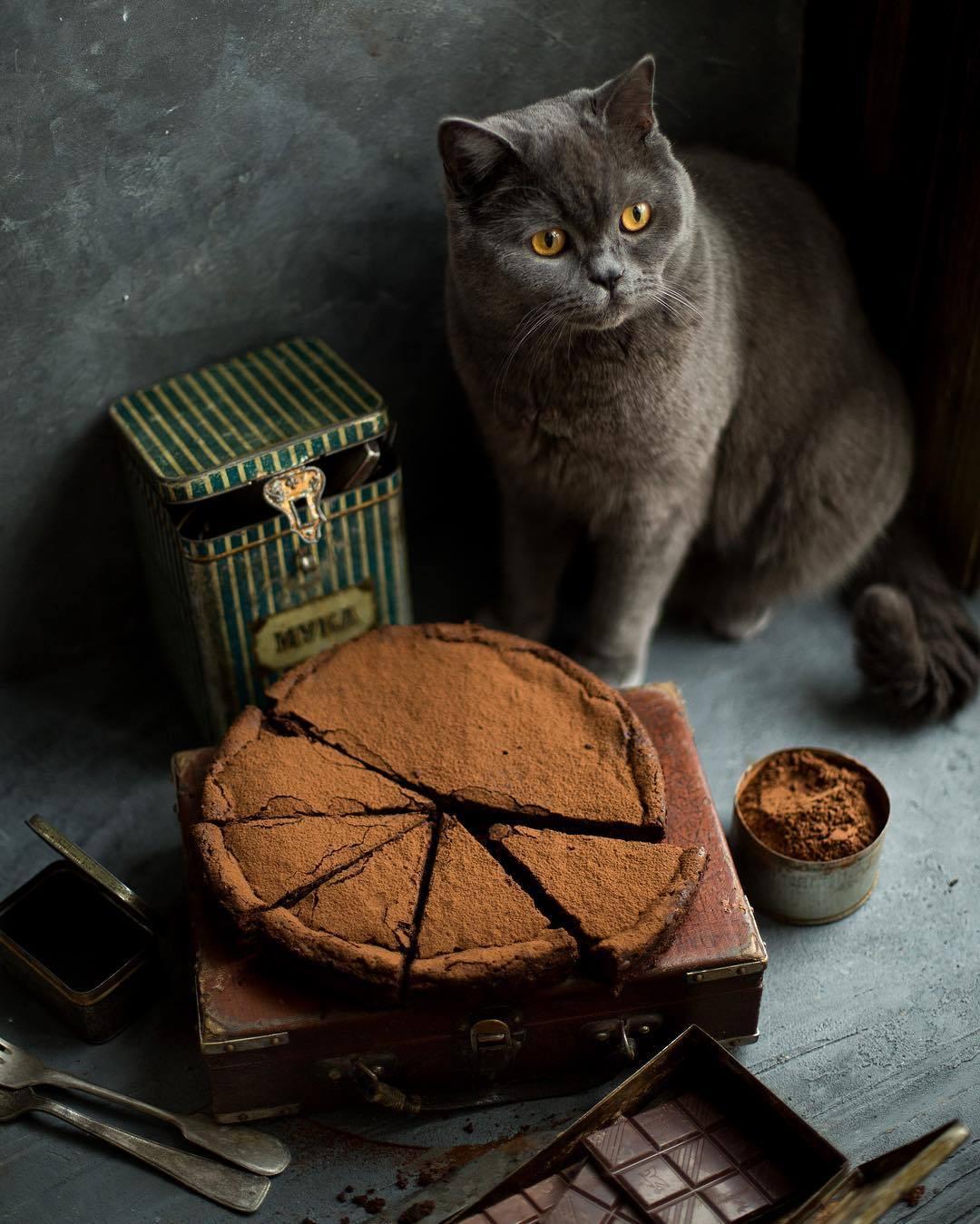 宠物-这位漂亮的美女蛋糕师,让猫咪来为蛋糕代言,将平淡无奇的蛋糕化腐朽为神奇(42)