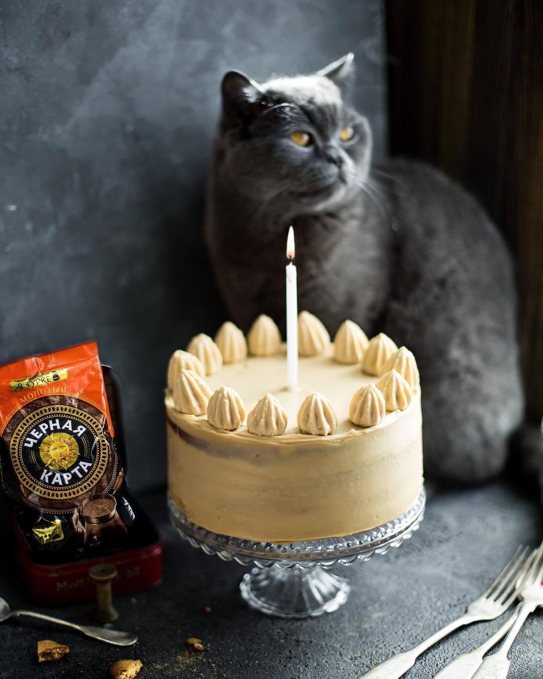 宠物-这位漂亮的美女蛋糕师,让猫咪来为蛋糕代言,将平淡无奇的蛋糕化腐朽为神奇(56)