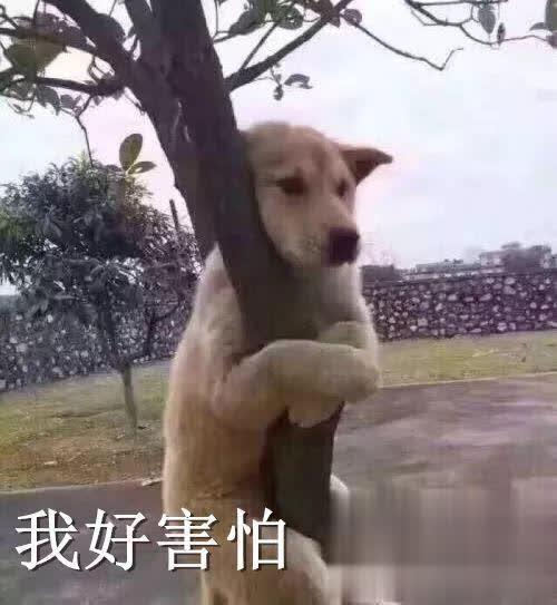 """宠物-免费yoqq""""妈,我不想染发!""""yoqq资源(3)"""