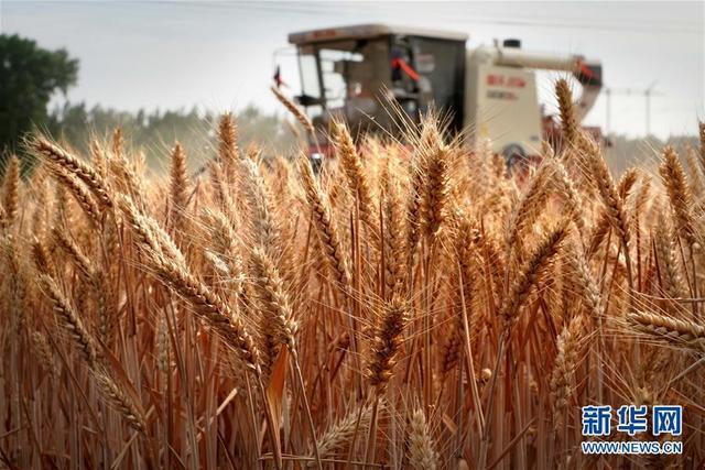 新华社点赞河南:盛满丰收的田野 大有可为的土地