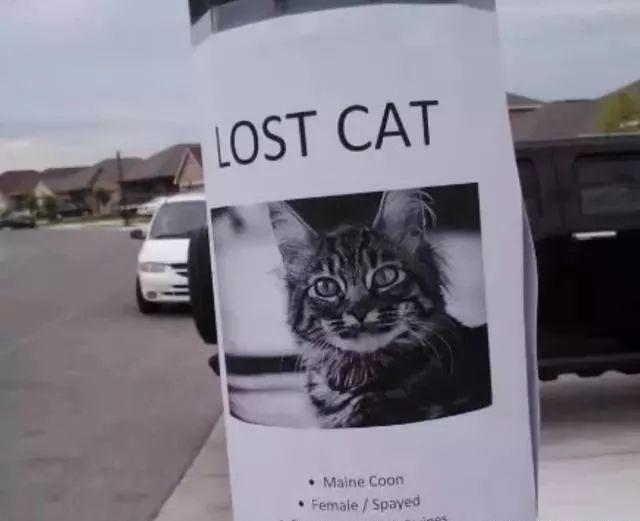 猫咪不幸走丢,一年后却奇迹般找了回家,猫:找你找得好辛苦啊!