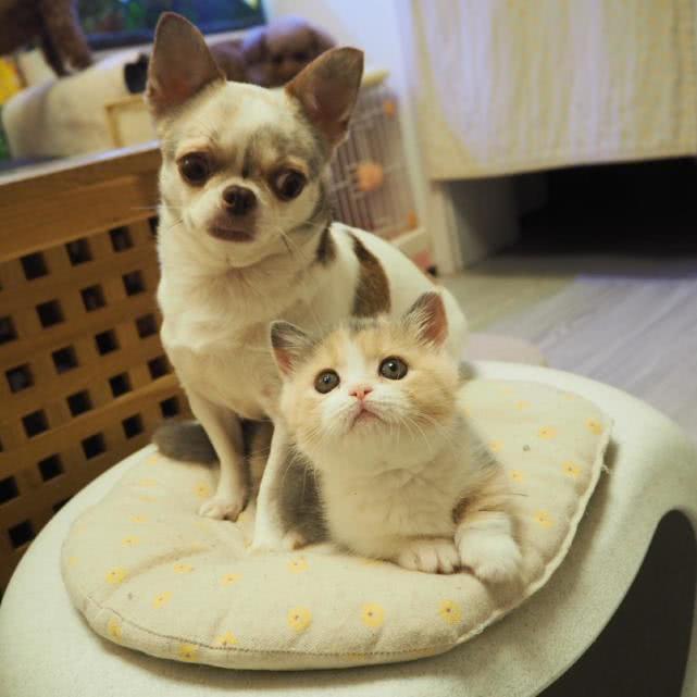 宠物界难题:猫和狗谁更聪明?